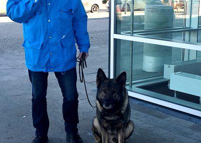 Sicherheitsdienst Hundestaffel